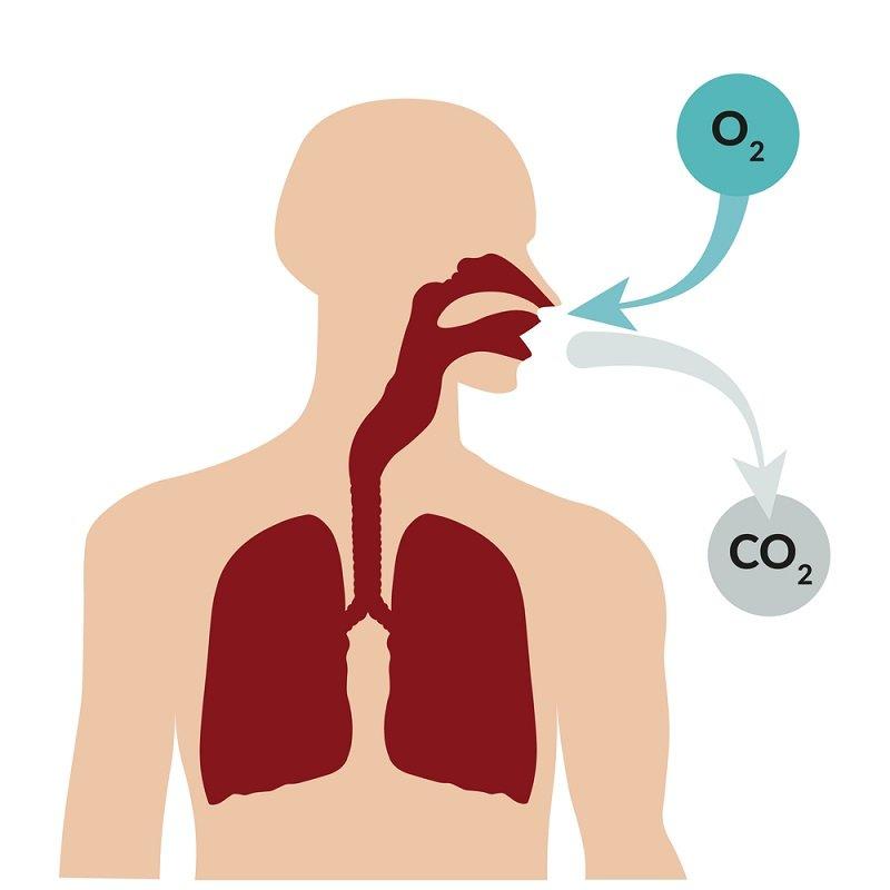 диета долгого дыхания