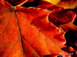 autumn14 009x