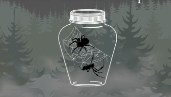 Path of the Spiders