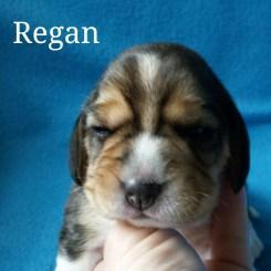 Regan 2 weeks