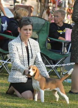 """Talbot Hill Dukeang Wanderlust, """"Audrey"""" - 2016 NBC Specialty, class placement in the Bred By Exhibitor class. 6 months old at her first show."""