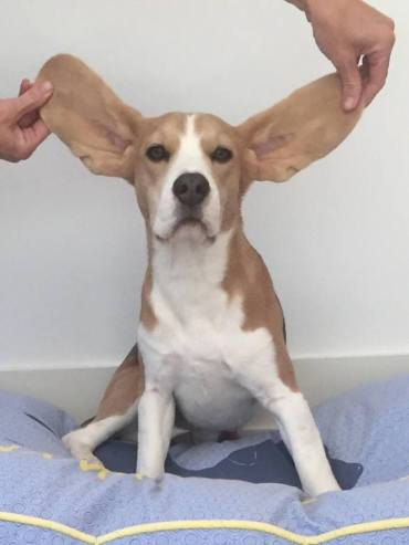 George has ears!