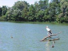 parc-des-oiseaux11