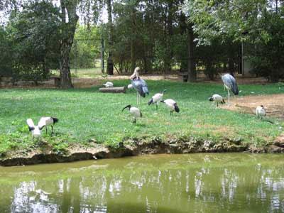 parc-des-oiseaux13