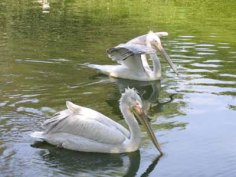 parc-des-oiseaux28