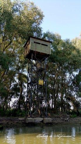Delta Dunării observator pasari