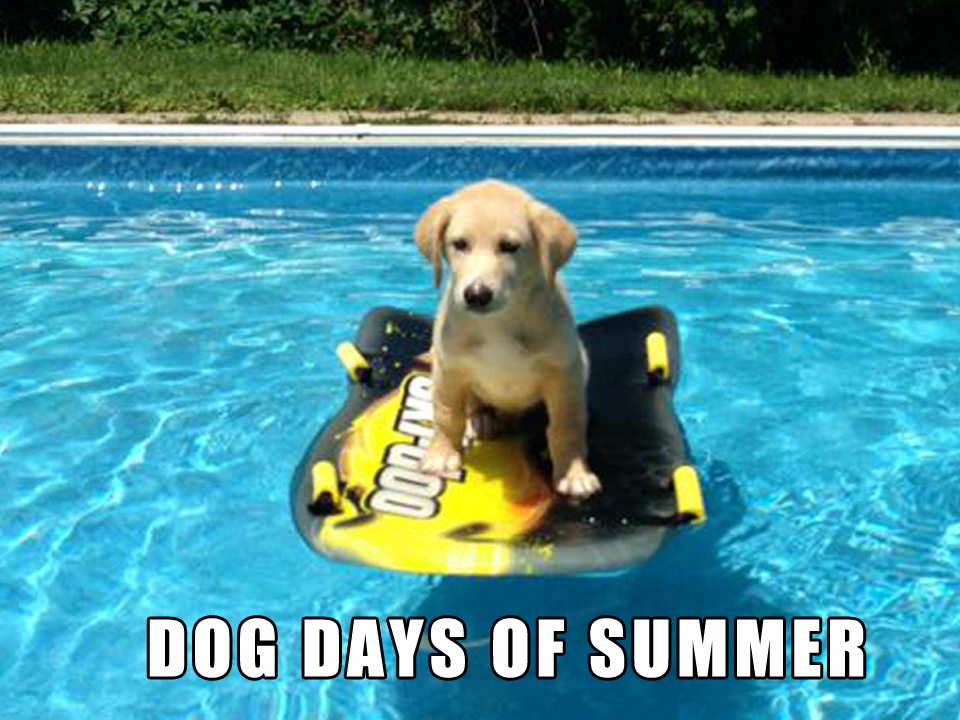 Image result for dog days of summer meme