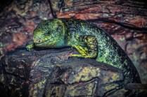 lizard-224857.jpg