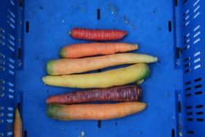 Kleurrijke wortels bij de Veggie Rescue Actie