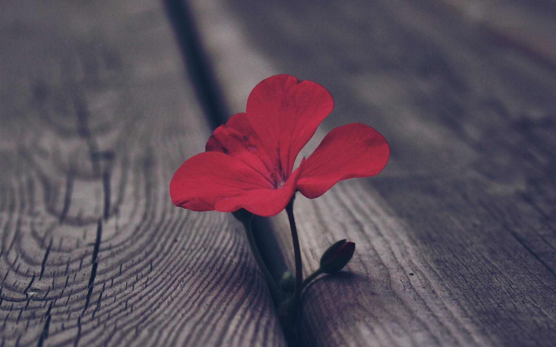 Lélek vagy logika? Az önmegismerés és gyógyulás valódi útja.