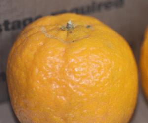 Orange Observations
