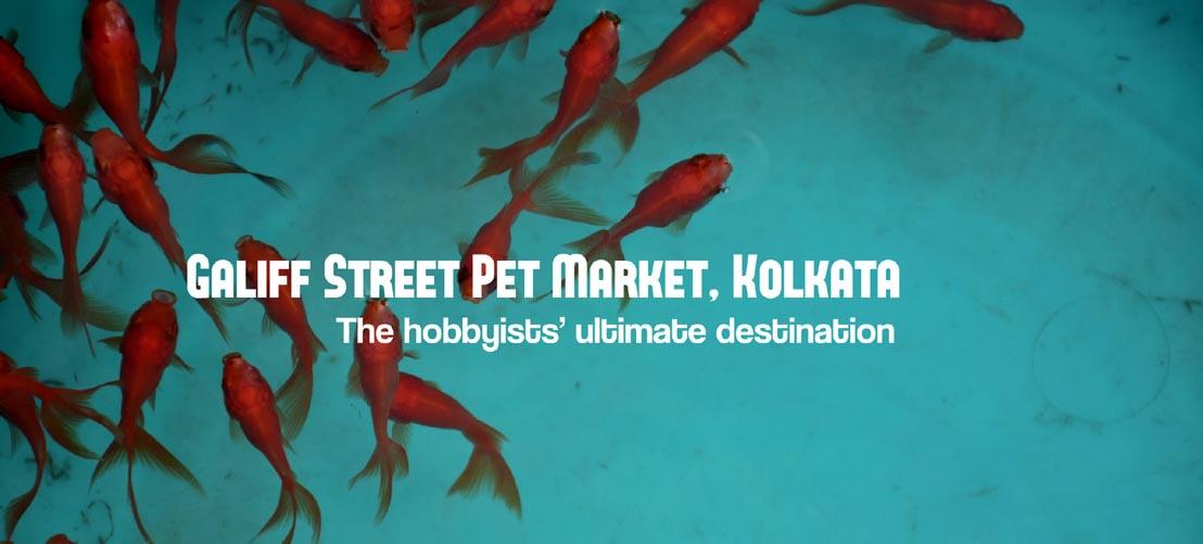 Galiff Street Pet Market, Kolkata