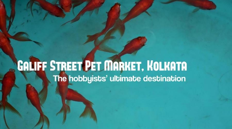 Galiff Street Pet Market, Kolkata – the hobbyists' ultimate destination