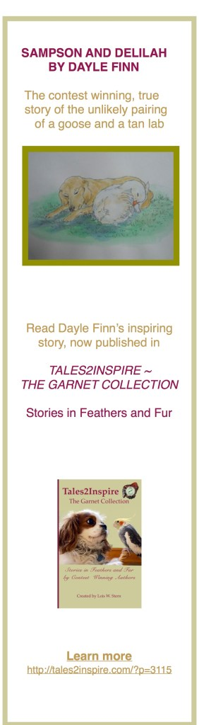 A Tales2Inspire Winning Story