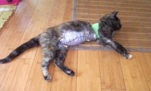 Tales2Inspire inspiring story of a cat named Mia
