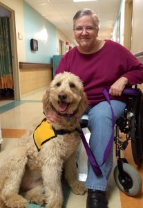The inspiring story of Daisy the Goldendoodle