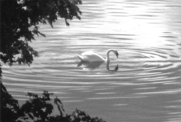 The Swan, an inspiring story now published in Tales2Inspire ~ The Opal Collection
