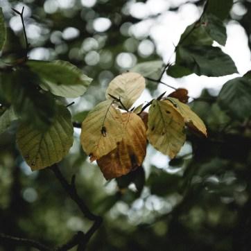 Blushing Lately - October in Burley-25