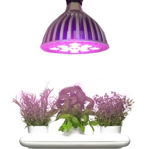 led-grow-lights-herbs-300x300