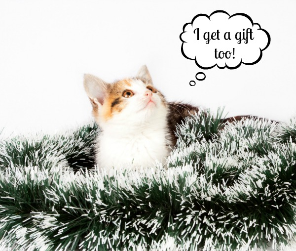 spotted kitten and Christmas decorations tinsel
