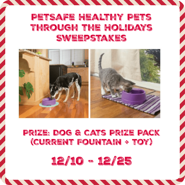 PetSafe Healthy PEts