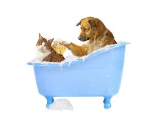 Furry Friends Bath Time!