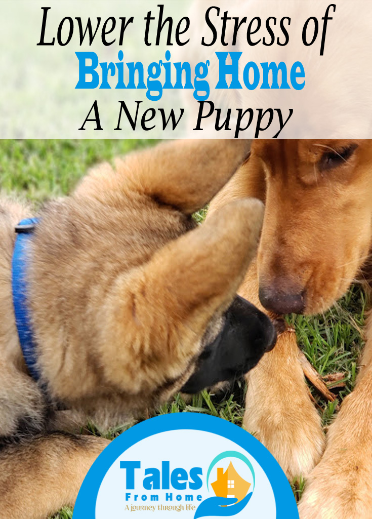 Tips for Briniging home a new puppy #puppy #familypets #pets #dogs #familyfun #puppys