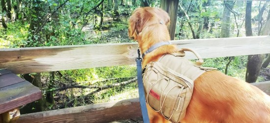 Hiking With Dogs, Having fun n the Outdoors with your Canine Companion!