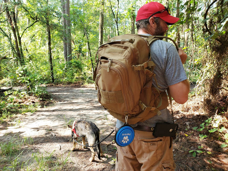 Hiking With Dog's, Having fun with your canine companion.
