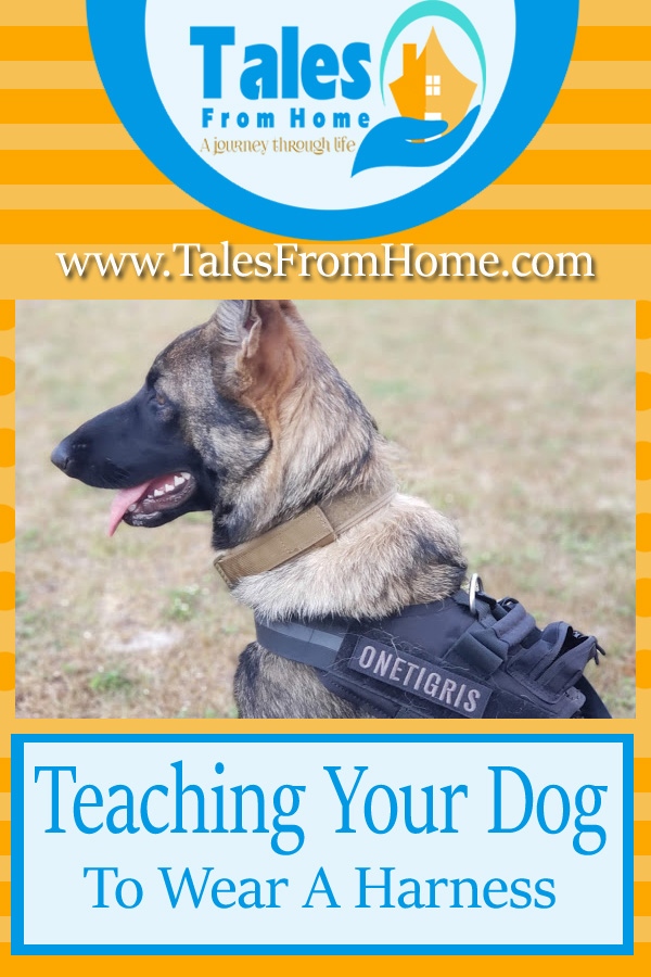 Teaching your dog wear a harness! #dog #pets #puppies #dogtraining #familypets