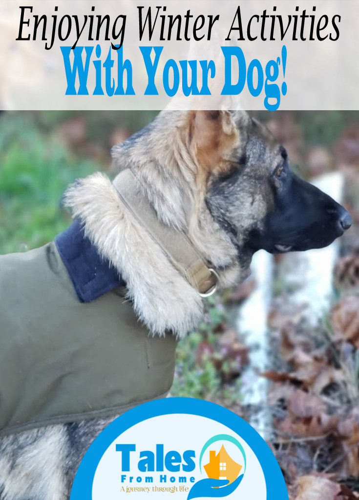 Enjoying Winter Activities with your Dog! #dogs #winter #family #pets #familypets #puppy