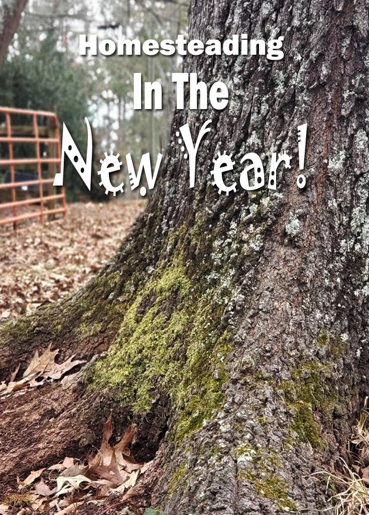 Homesteading has been an amazing journey so far! There is so much to learn, plan for an accomplish! Join us on our journey and find out how we are starting out the new year! #familylife #Countrykids #homsteding #homesteadlife #farming #microfarm #smallhomestead