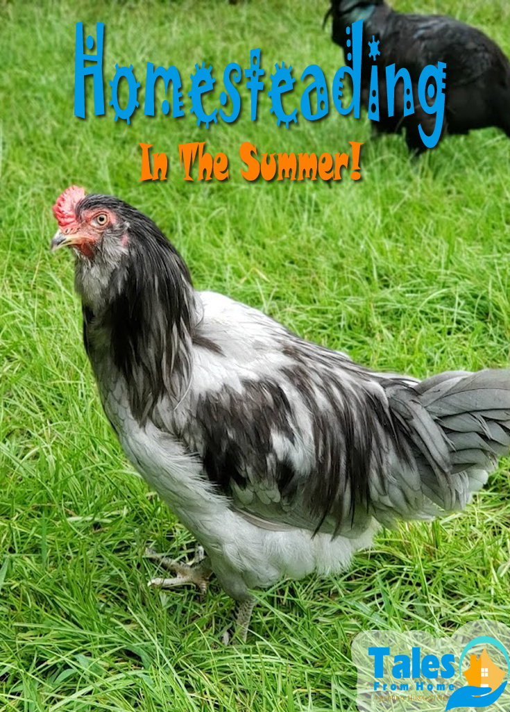 Homesteading in the summer! What's we've managed to get done during the hottest months of the year! #homesteading #homesteader #homestead #selfsufficiency #selfsufficient #turkeys #chickens #farming #family #goats #healthyliving
