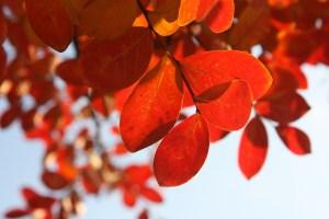 leaves-449622_1920