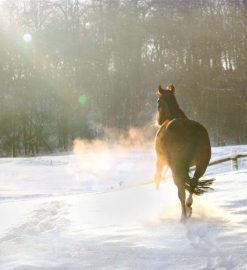 Caring for your horse or pony during the winter months