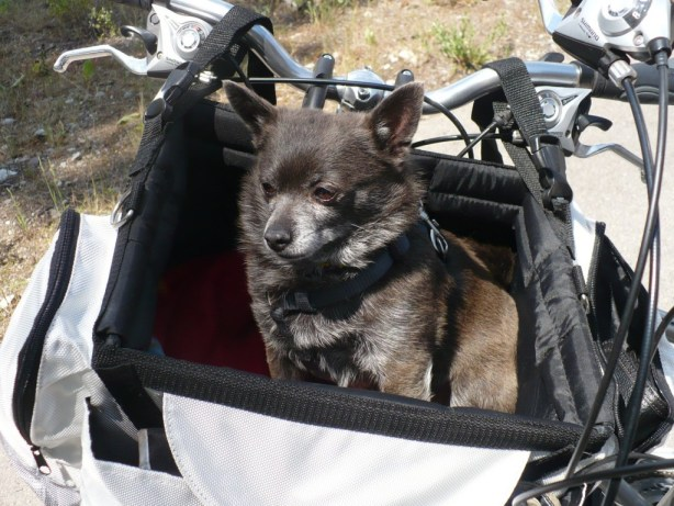 Roxy in her bike basket