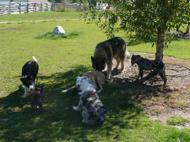Jackson Hole dog park