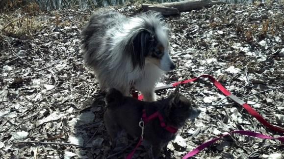 Idita-walk challenge,dogs.walking
