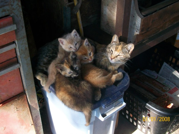 update on the farm kittens