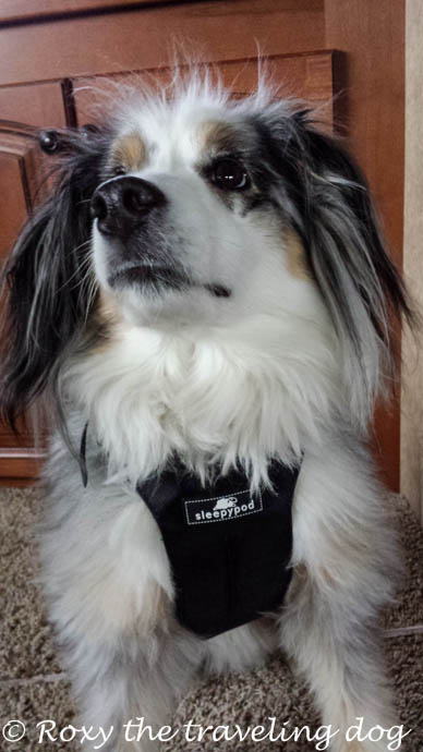 How to have the safest traveling dog , sleepypod, clickit
