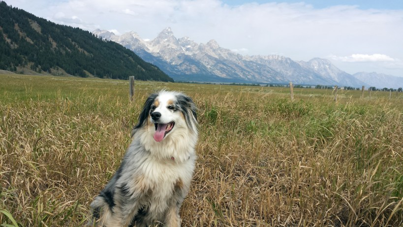 Tetons and Torrey, please vote for Torrey