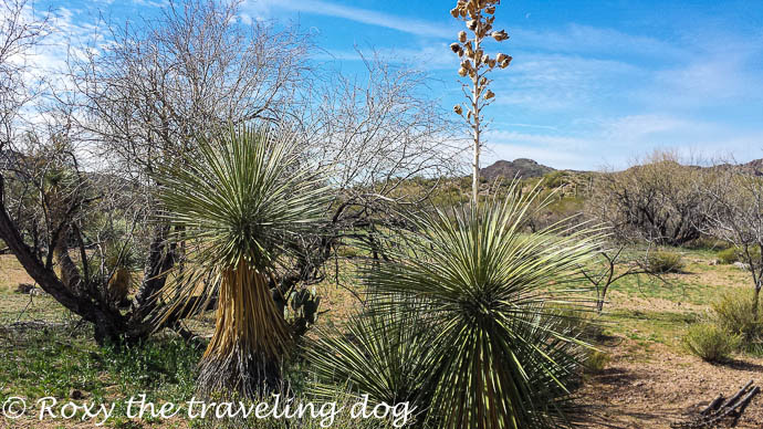 Boondocking near Wickenburg, Arizona