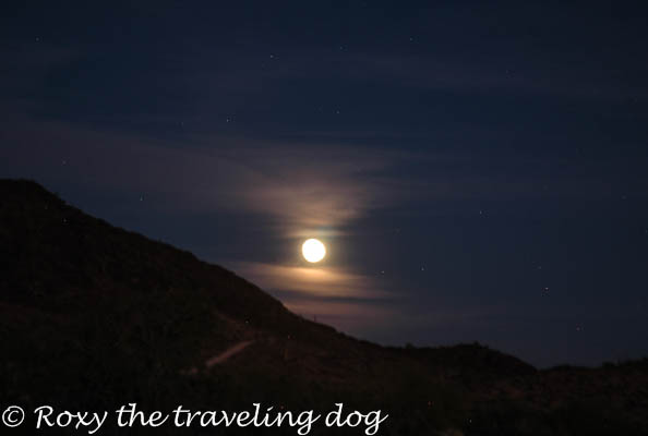 Full moon in the desert. Persevering in life