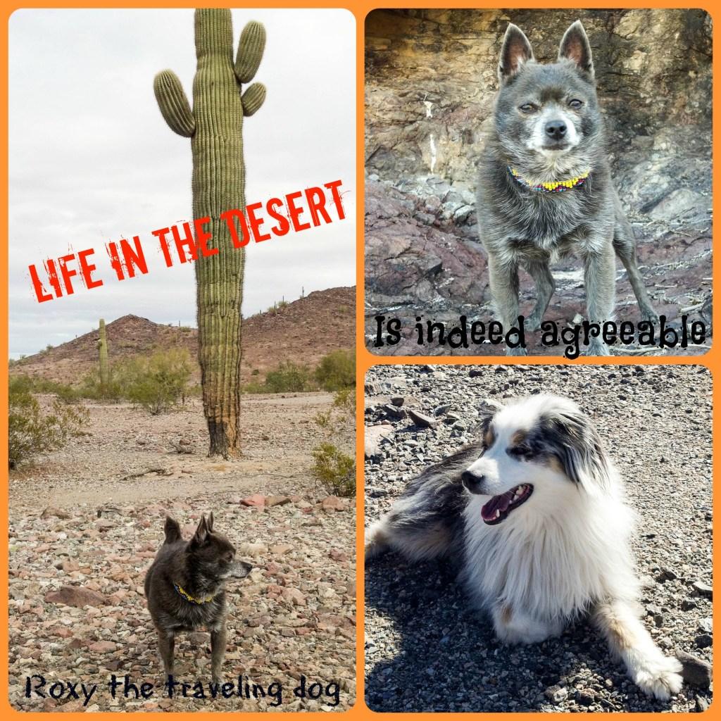 Some fun desert photos