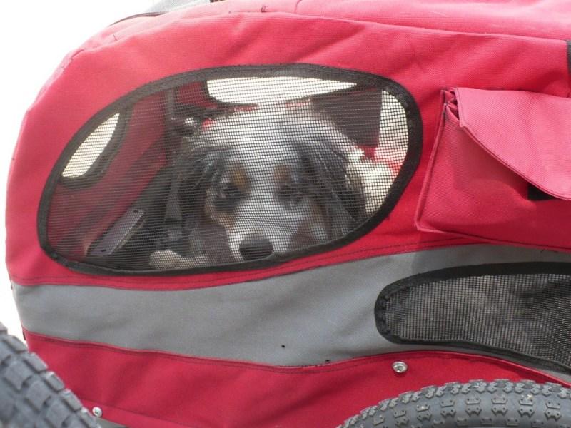 Solvit hound about bike trailer