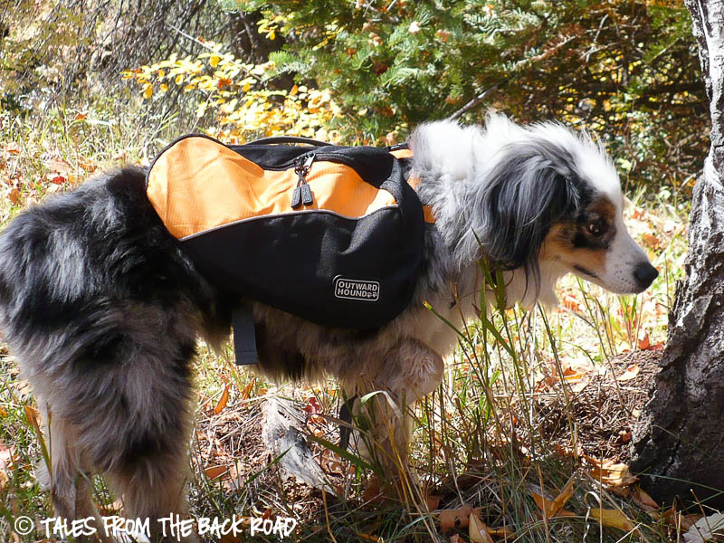 Kyjen outward hound dog backpack review