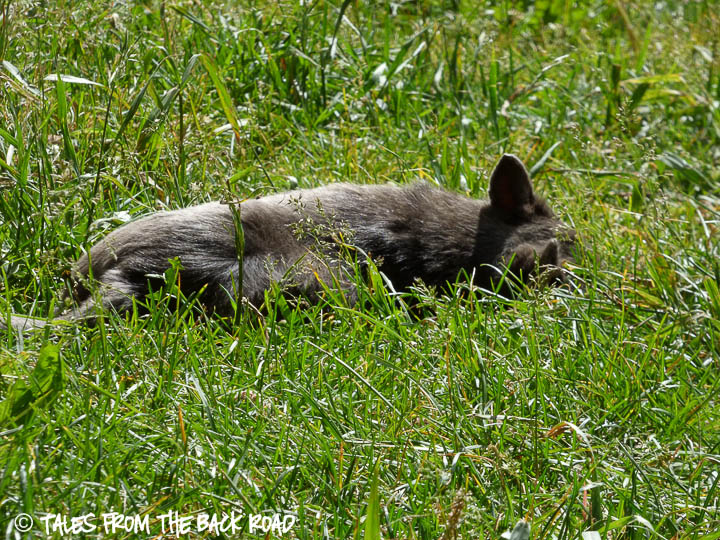Laying in the sun, in the grass