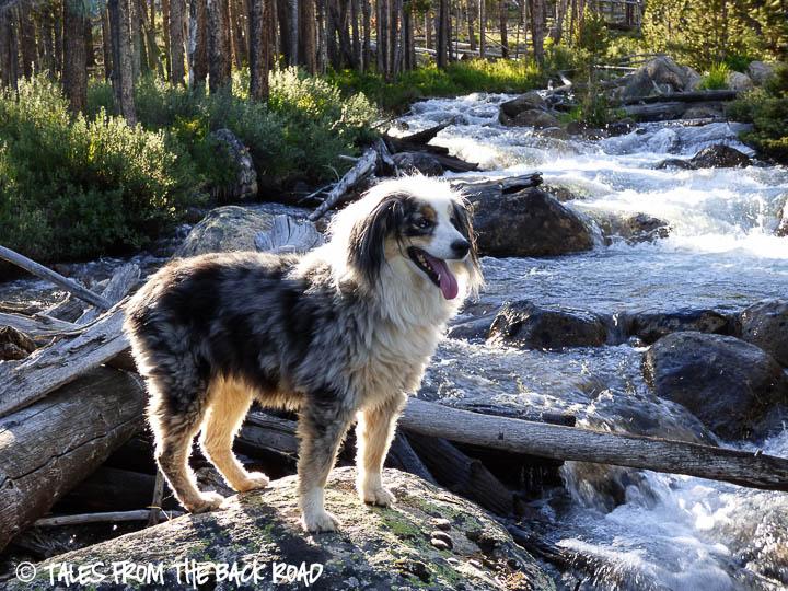 Torrey at Hell roaring creek
