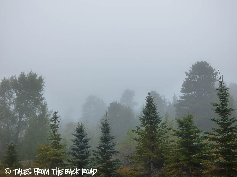 A misty, moisty, morning
