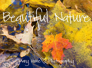 Mary Hone photography, beautiful nature